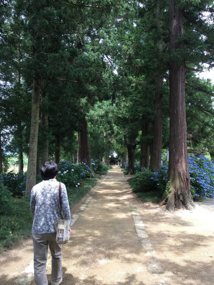 医王寺の並木道
